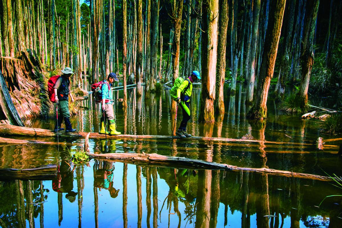 忘憂森林 Nepenthe Forest