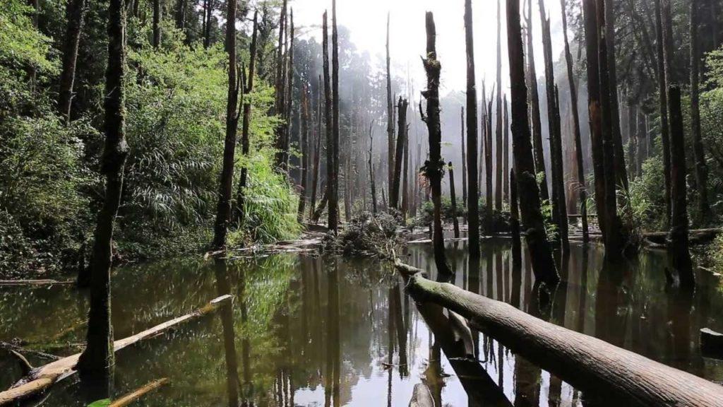 南投忘憂森林包車旅遊景點介紹