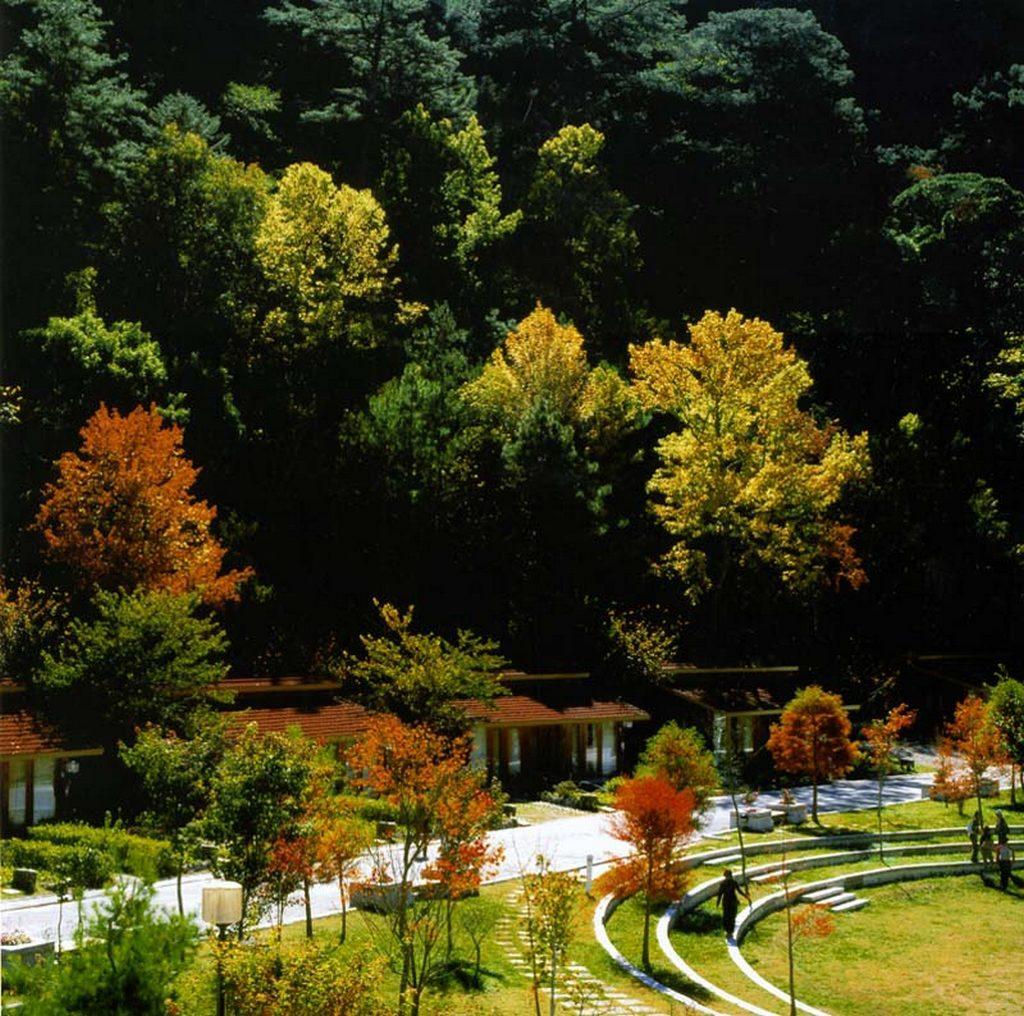 武陵農場,櫻花,楓葉