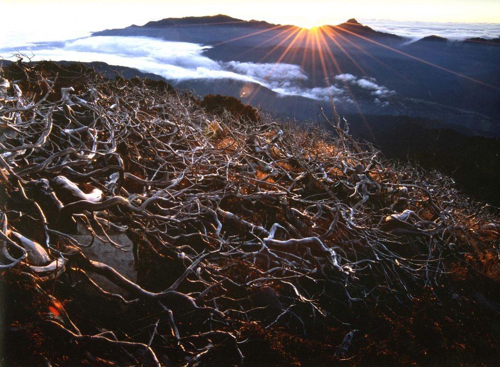 大雪山國家森林遊樂區,神木,森林