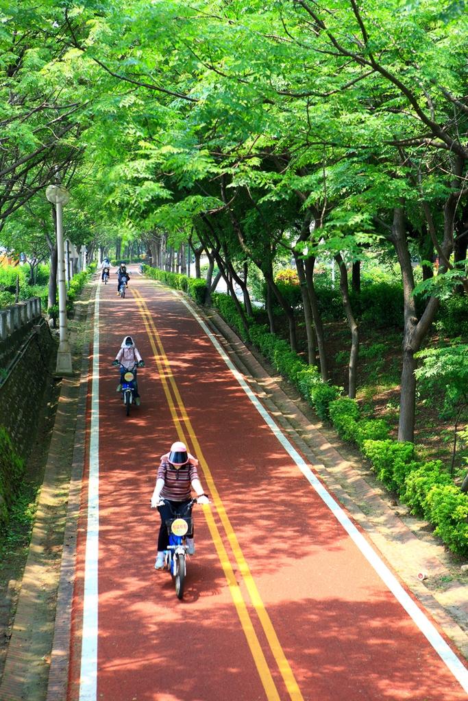 東豐自行車綠廊,自行車,綠廊