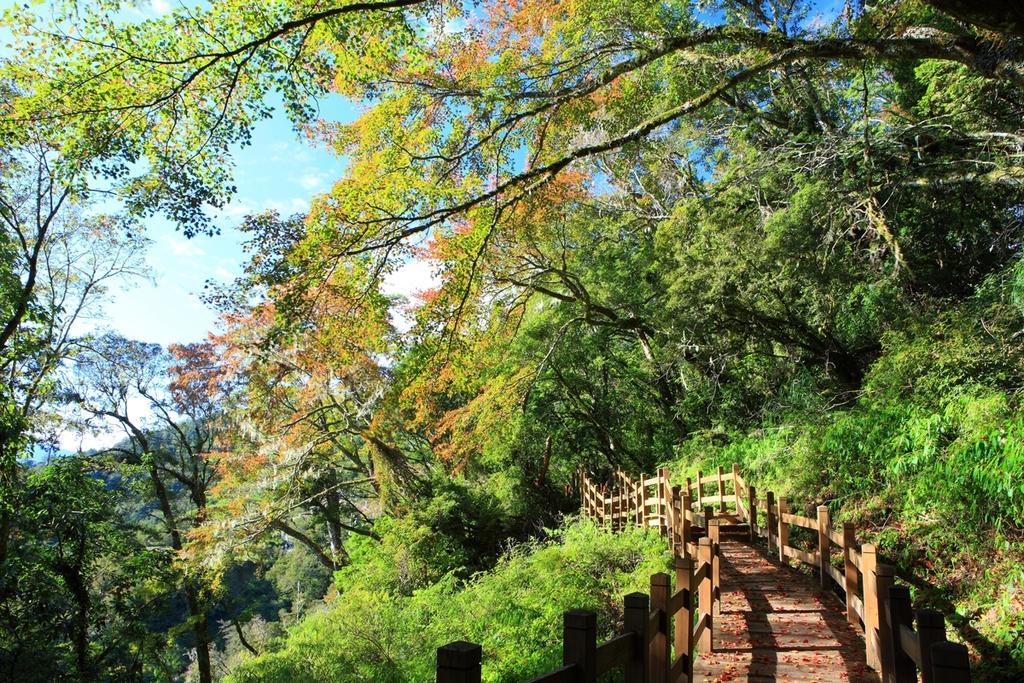 位於南橫154.5公里處,遊樂區為以臺灣二葉松、紅檜為優勢植群所形成之中高海拔林相為主,間雜臺灣紅榨槭等變色葉闊葉林木,形成鳥類絕佳的棲息環境,壯麗的日出景致、汲手可取的雲海景觀、午後常見的雲霧變幻、在步道上閑遊的帝雉、數人合抱的紅檜巨木、枝頭覓食的山雀、秋冬瑰麗的樹木變裝…讓人體驗不一樣的中高海拔自然風情。  開放時間 行前請參閱「台灣山林悠遊網」首頁之國家森林遊樂區休園狀況